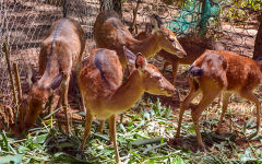 Visit the Animal Farm at Dalat Edensee